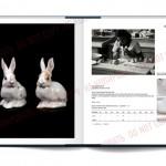 OpenBook-allach20